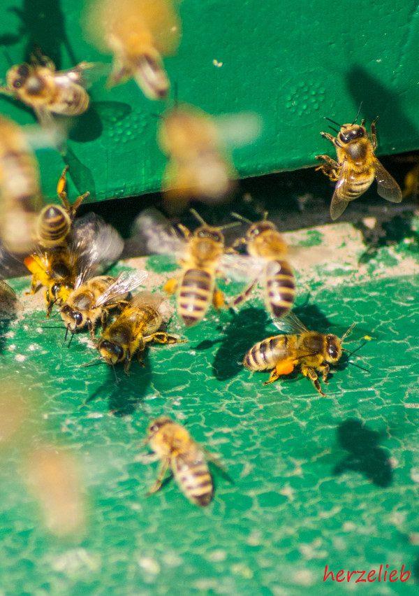 Auf meinem Foodblog gibt es jetzt hin und wieder über mein Hobby - die Imkerei und die Bienen