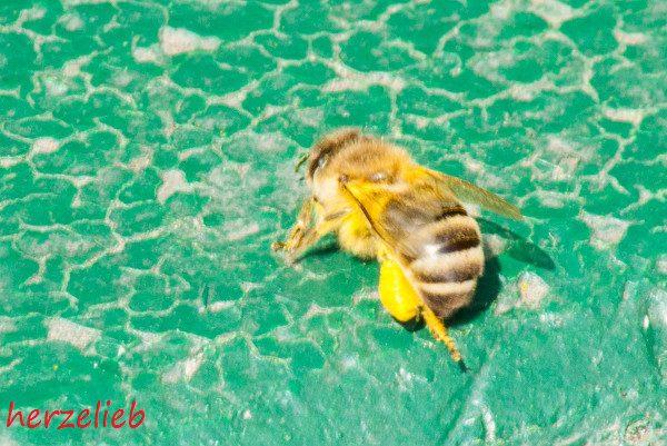 Foodblog und Bienen - das passt gut zusammen!