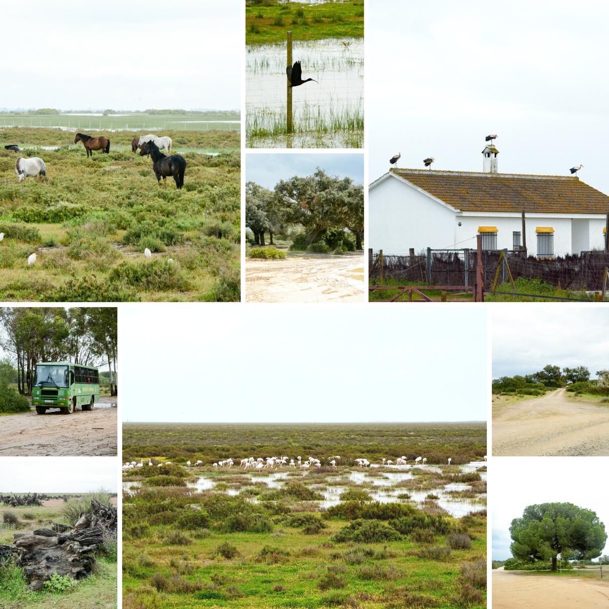 Der Donana Nationalpark in Andalusien ist eine Reise wert!