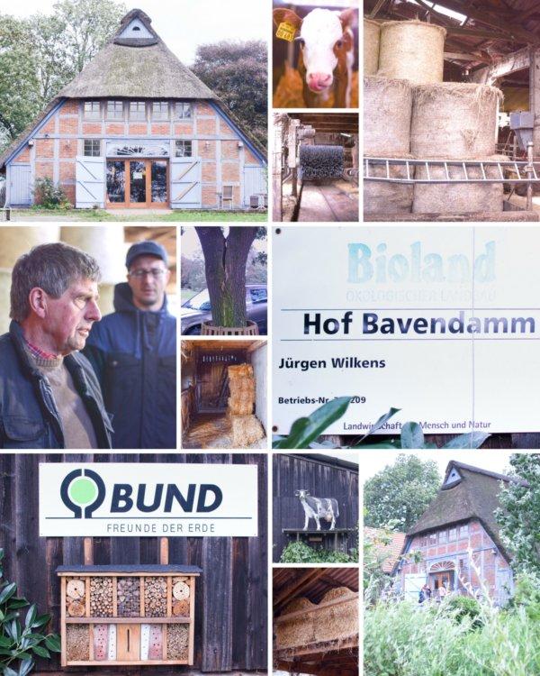 Hof Bavendamm im Bremer Blockland - Artenschutz und Tierliebe